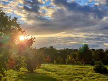 The Arboretum Through the Seasons